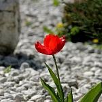 Menstruatie stolling als stenen in een tuin