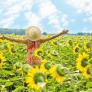 Zomer vrij in zonnebloemen